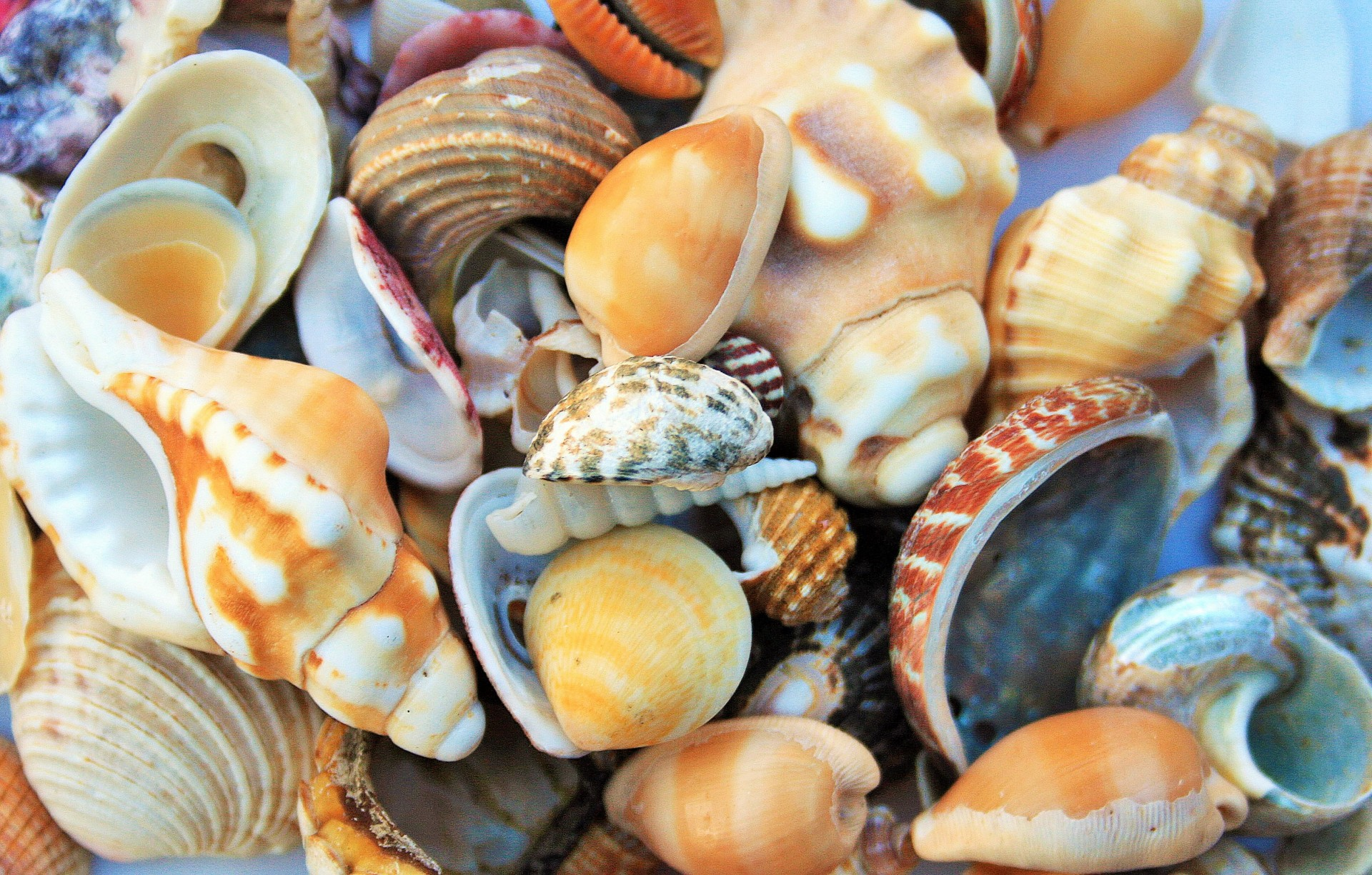 collection-of-sea-shells-1410125008gv6