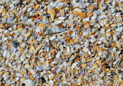 sea-shells-14026950103P7