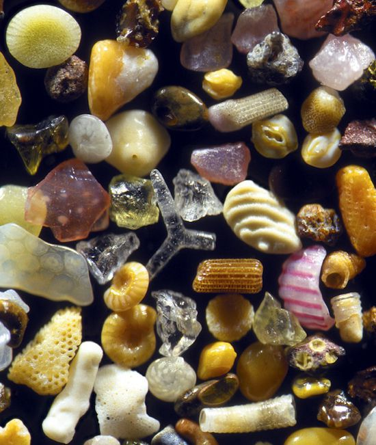 wp-contentgallerymagnified-sand-grainssand-grains.jpgfit-in__850x850